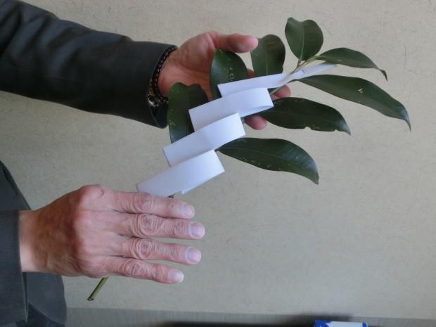 紙垂付き榊