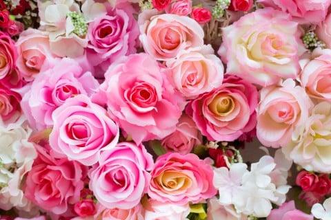 ブログ5用薔薇